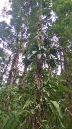 Chaque arbre est un écosystème à lui seul