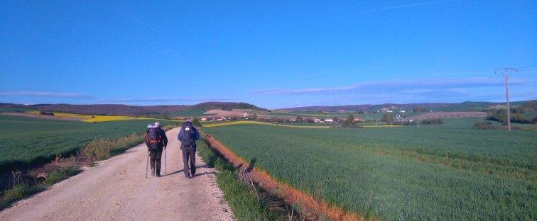 Blé, et encore blé, et Espinosa del Camino à l'horizon
