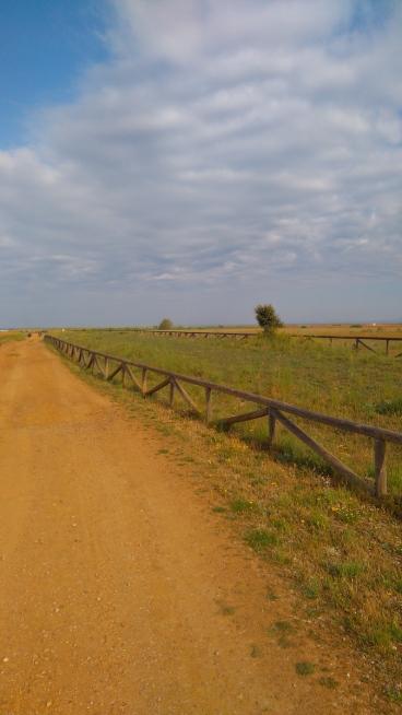 Une voie romaine assez bien conservée, derrière les barrières de droite