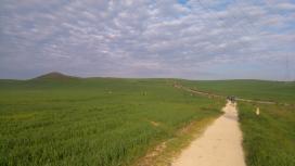 Les pèlerins dans le blé (pas encore dans le pétrin).