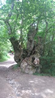 autre arbre remarquable